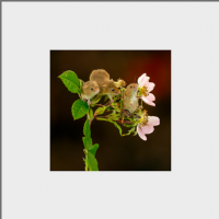 Harvest Mouse Mounted Print AJ_05_MM